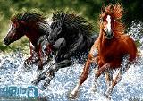 سایز دو (تشعیر) از فرار اسب های وحشی