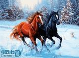 تاخت دو اسب در برف