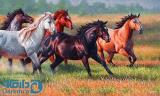 اسب ها در چمنزار
