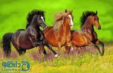دشت اسبهای وجشی