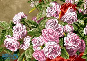 گلهای رز صورتی