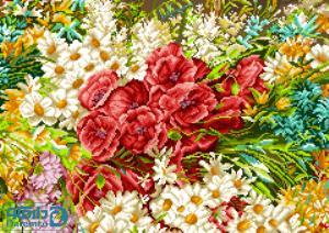 گلهای شقایق
