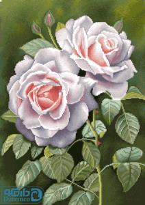 رزهای سفید